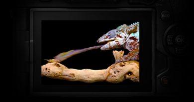 Firmware uppatering för kamerorna Olympus OM-D E-M1 Mark II, OM-D E-M5 Mark II och Olympus PEN-F